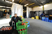 集荷場:生産者自らが販売先や<br />価格を決めて出荷。
